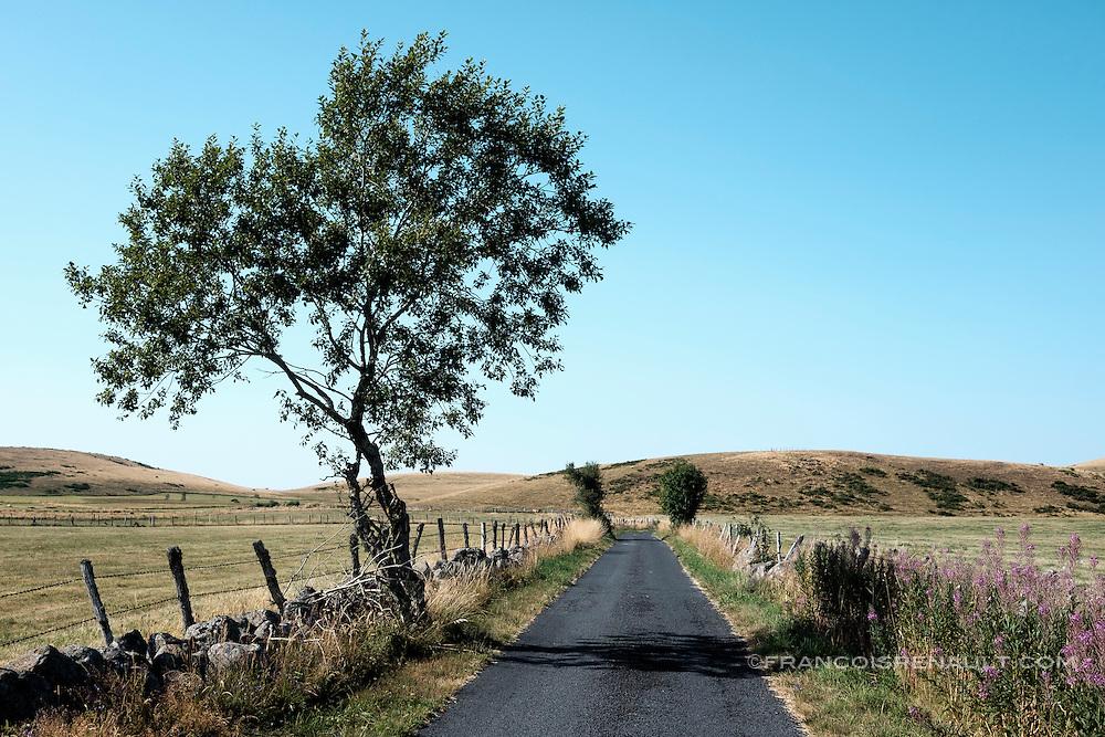 Petite route secondaire de campagne en Aubrac, Auvergne, France. / Small country road by Aubrac, Auvergne, France.