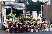 Flower market square Plaza de Triso de Molina, Madrid, Spain.