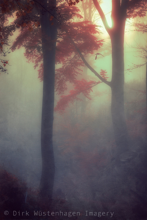 Dreamy sunrise n a misty forest - textured photograph<br /> Sosiety 6 products: https://society6.com/product/out-of-darkness-bum_print#1=45