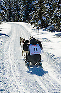 Musher Dave Turner competing in the Fur Rendezvous World Sled Dog Championships at Campbell Airstrip in Anchorage in Southcentral Alaska. Winter. Afternoon.