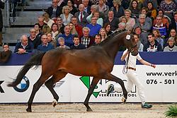 324, Kenzo<br /> KWPN Stallionshow - 's Hertogenbosch 2018<br /> © Hippo Foto - Dirk Caremans<br /> 02/02/2018