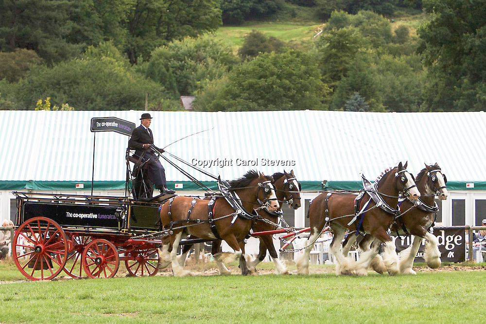 Gawin Holmes driving his own Clydesdales, Sorbie, I, Jake and John B<br /> 3rd Team Turnouts