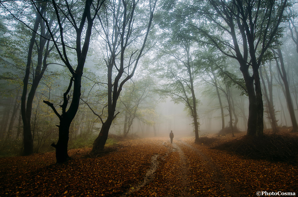 Man on road in mysterious forest with fog