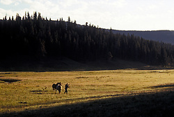 Wrangler retrieves a horse from a high country meadow, the start of another day on an open-country horse-packing trip into the wilds of this national park.