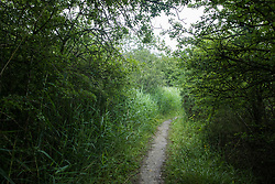 Calvert, UK. 27 July, 2020. A path winds its way through trees and undergrowth at Calvert Jubilee Nature Reserve. On 22nd July, the Berks, Bucks and Oxon Wildlife Trust (BBOWT) reported that it had been informed of HS2's intention to take possession of part of Calvert Jubilee nature reserve, which is home to bittern, breeding tern and some of the UK's rarest butterflies, on 28th July to undertake unspecified clearance works in connection with the high-speed rail link.