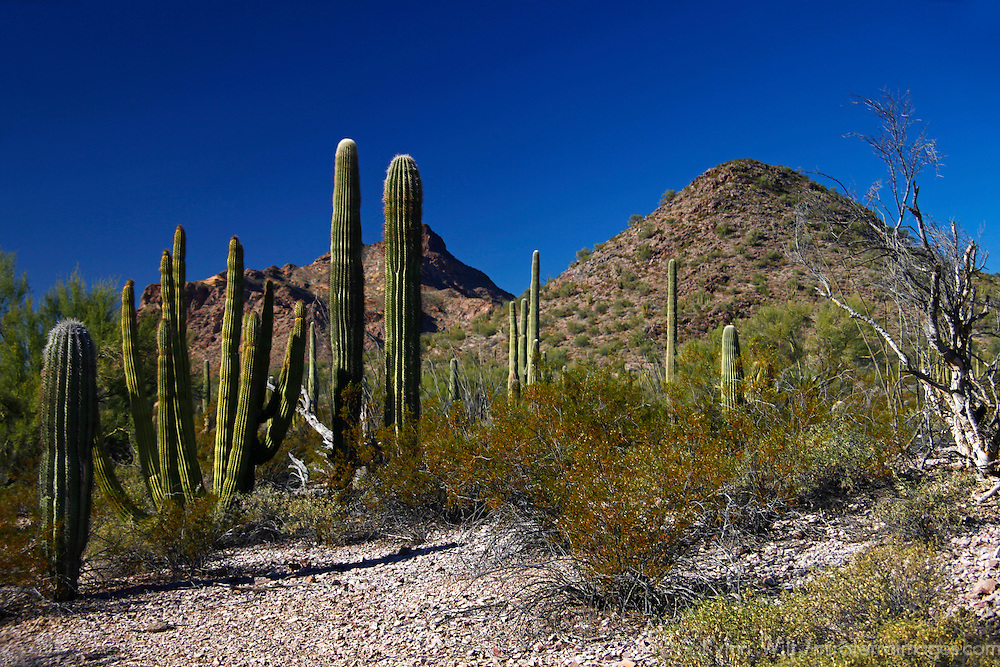 North America, USA, Arizona, Organ Pipe Cactus National Monument Twin Peaks.