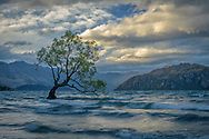 Oceania, New Zealand, Aotearoa, South Island, Wanaka, Wanaka Tree
