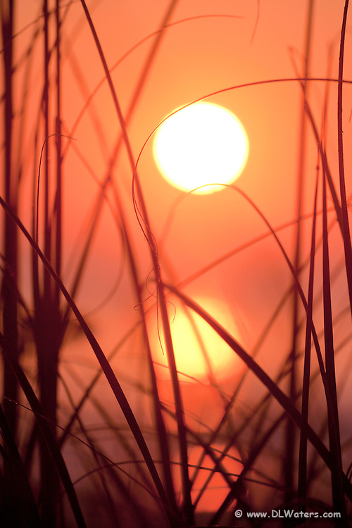 Orange sunrise photographed through grass and reeds at Kill Devil Hills beach with the sun's reflection in the ocean.