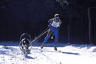 DEU, Germany,  dog sled race in Winterberg, Sauerland, Siberian Huskies.....DEU, Deutschland, Schlittenhunderennen in Winterberg, Sauerland, Sibirischer Huskies.........