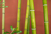 Green bamboo against a red wall. Portland, Oregon.