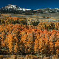 Orange aspen trees in autumn on Conway Summit, Mono County, California.