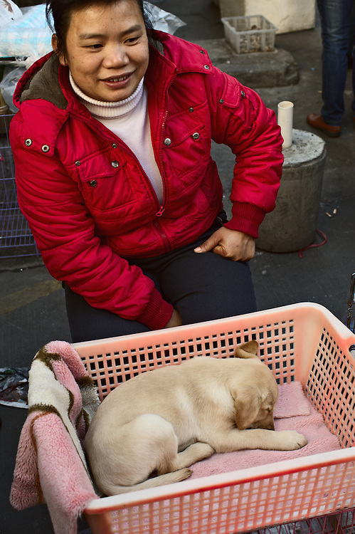 Woman with puppy for sale in pink basket at street market, Guangzhou, China