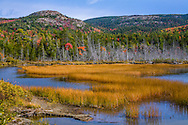 Marsh Grass In Seal Cove Pond On A Beautiful Autumn Afternoon At Mount Desert Island And Acadia National Park, Maine, USA