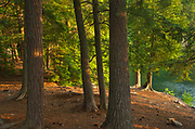 Forest at sunset at edge of Killarney Lake<br />Killarney Provincial Park<br />Ontario<br />Canada