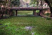 Backwaters waterplanten, Alleppey, Kerala provincie