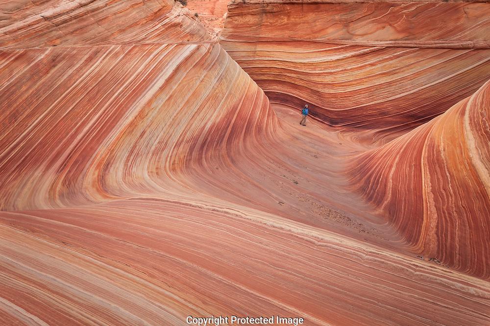 The Wave, hiker, Coyote Buttes, Paria Canyon-Vermilion Cliffs Wilderness, Colorado Plateau, Arizona
