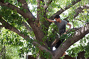 Ahmed Mohamed climbs a tree behind his home in Irving, Texas on July 12, 2016. (Cooper Neill for The Washington Post)