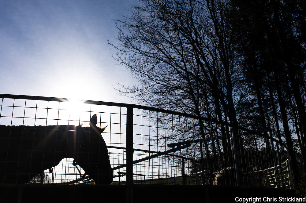 Ancrum, Jedburgh, Scotland, UK. 2nd April 2015 - Horses enjoy a gorgeous spring morning while having a stroll on a horse walker while there stables are mucked out.