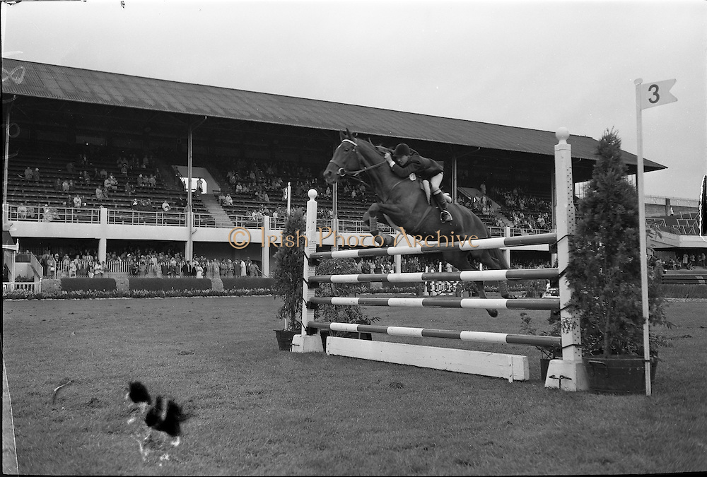 "09/08/1962<br /> 08/09/1962<br /> 09 August 1961<br /> RDS Horse Show, Ballsbridge Dublin, Thursday. <br /> Picture shows ""Glide on"", ridden and owned by Mrs H. Morrison, Wigmore, Aghadowey, Coleraine, Co. Londonderry, who was second in Competition ""H""."