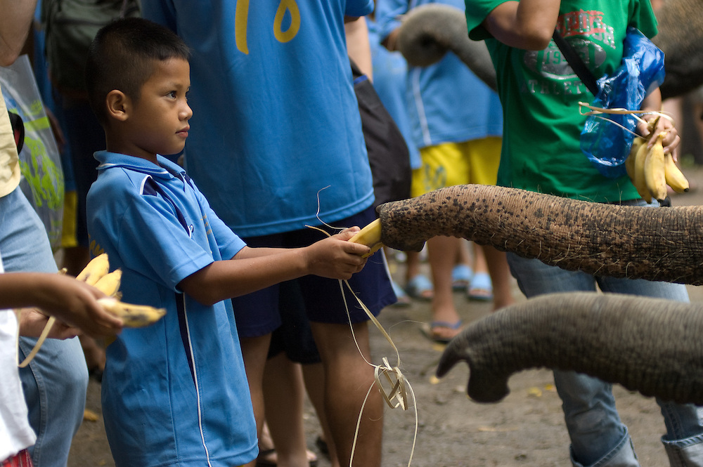 Feeding elephants after the show, Maesa Elephant Camp, near Chiang Mai, Thailand