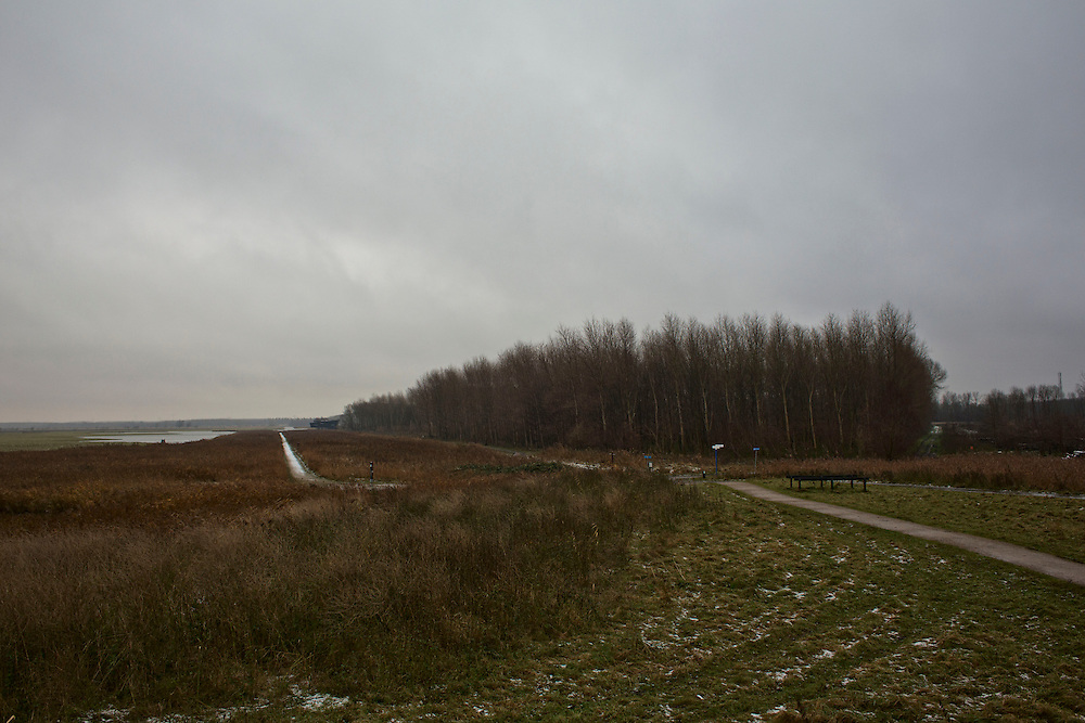 "A public footpath along the edges of the Oostverdesplassen nature reserve. The reserve is a wilderness that was constructed from reclaimed land. The reserve occupies fourteen thousand perfectly flat acres on the shore or the inlet turned lake. This area was originally designated for industry; however while it was still in the process of drying out, a handful of bioligist convinced the Dutch government that theland would be better used to recreate a paleolithic landscape. The biologist set aboutstocking the Oostverdesplassen with the sorts of animals that would have inhabited the region since prehistoric times had it not been underwater. For example, Heck cattle, were used in place by the extinct aurochs, these are cattle of a variety specially bred by Nazi scientists. The cattle grazed and multiplied, so did the red deer, the wild horses, the egrets, the geese and foxes. All were brought in from other countries. These mammals reproduced so prolifically that the German magazine Der Spiegel dubbed the Oostvaardesplassen ""the Serengeti behind the dikes."" Flevoland, Netherlands."