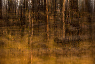 Impression of the burnt trees from the Yellowstone Fire of 1988. This image was created using a neutral density filter to allow long exposure shot of this scene to be taken.