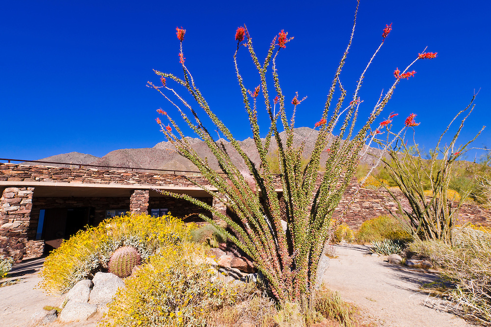 Desert garden at the visitor center, Anza-Borrego Desert State Park, California USA