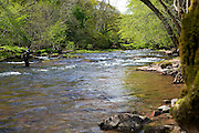 Wilderness TV Pro Guide, Lewis Hendrie, fly fishing on the River Usk, Wales, UK