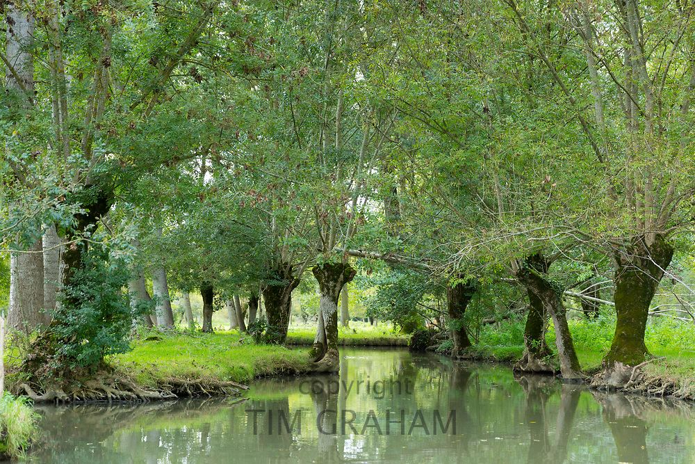 The Marais Poitrevin canal, willow trees and marshland region a Grand Site de France