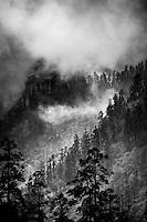 Clouds and mist swirls in the surrounding pine forests during the ascent on the Annapurna Dhaulagiri trail.