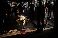A bleeding pig lies dead in traditional way pig slaughtering.  Doneztebe (Basque Country). December 08. 2016. The slaughter traditionally takes place in the autum and early winter and the work often is done in the open. (Gari Garaialde / Bostok Photo)