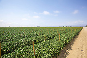 Organic farming Photographed near Ojai California USA
