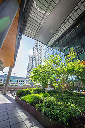 North America, United States, Washington, Seattle. Modern office buildings in the South Lake Union area.