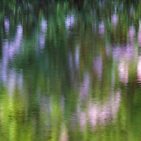 Impressionism photography of a Rhododendron reflecting in a quiet brook in Central Massachusetts. <br />
