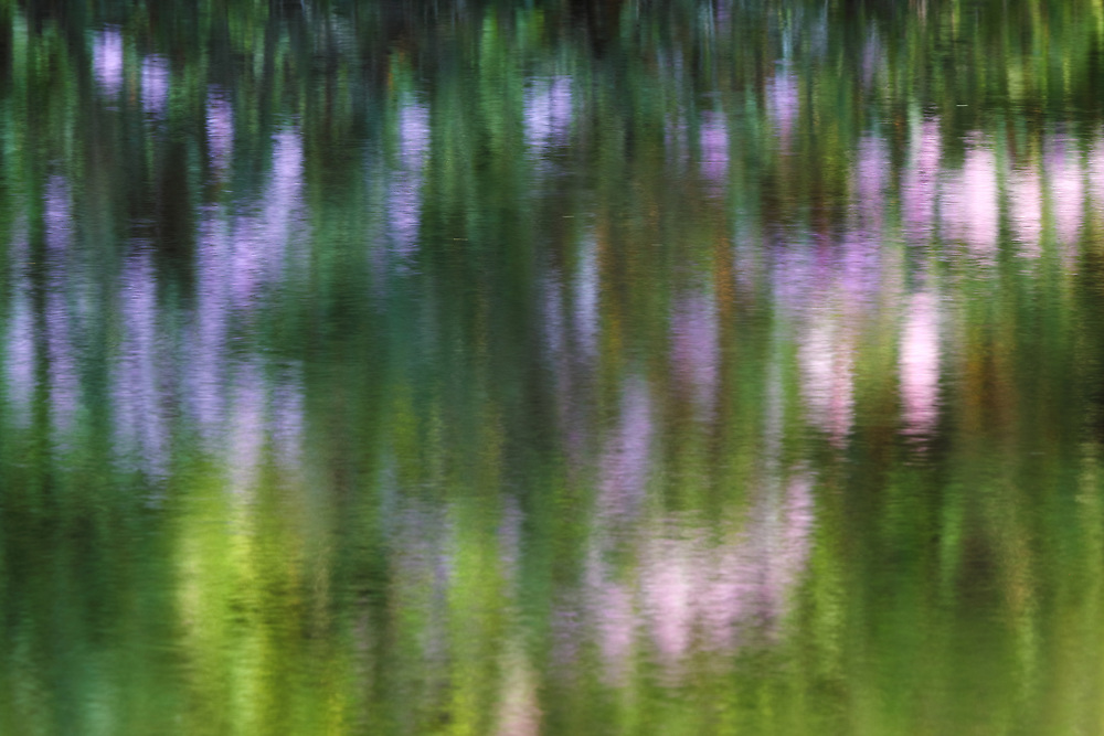 Impressionism photography of a Rhododendron reflecting in a quiet brook in Central Massachusetts. <br /> <br /> Impressionism photography are available as museum quality photo, canvas, acrylic, wood or metal prints. Wall art prints may be framed and matted to the individual liking and interior design decoration needs:<br /> <br /> https://juergen-roth.pixels.com/featured/spring-at-the-sudbury-grist-mill-juergen-roth.html<br /> <br /> Good light and happy photo making!<br /> <br /> My best,<br /> <br /> Juergen<br /> Photo Prints &amp; Licensing: http://www.rothgalleries.com<br /> Photo Blog: http://whereintheworldisjuergen.blogspot.com<br /> Instagram: https://www.instagram.com/rothgalleries<br /> Twitter: https://twitter.com/naturefineart<br /> Facebook: https://www.facebook.com