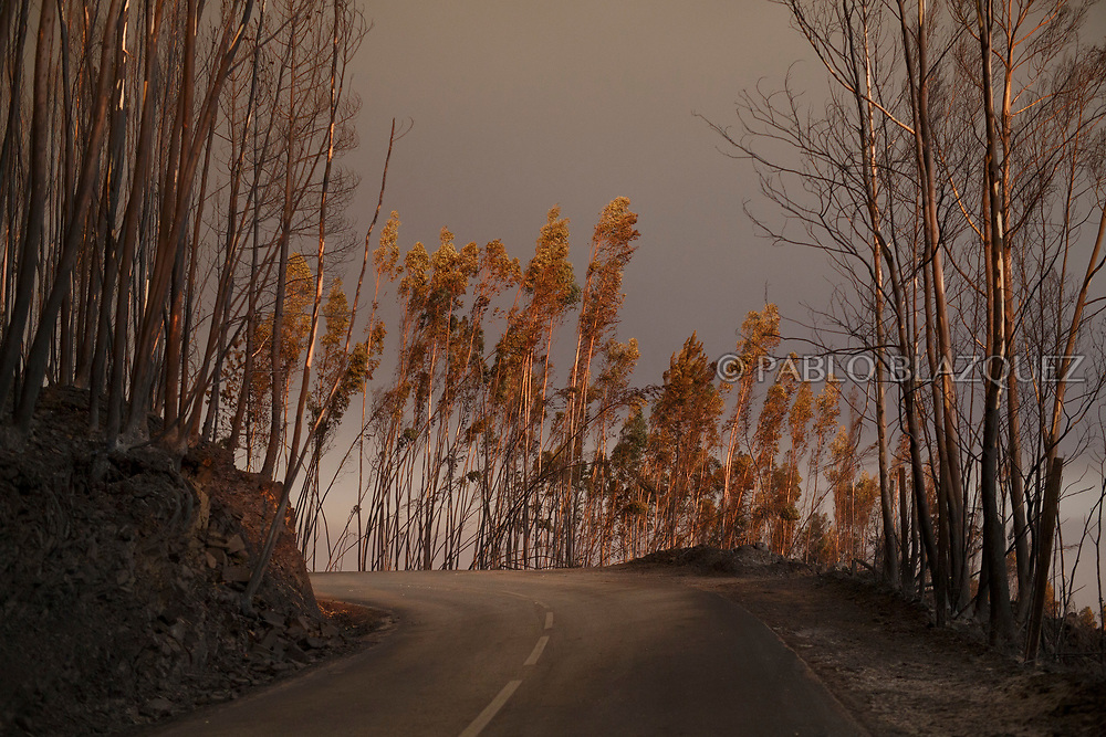 LEIRIA, PORTUGAL - JUNE 18:  A road crosses a burned forest after a wildfire took dozens of lives on June 18, 2017 near Castanheira de Pera, in Leiria district, Portugal. On Saturday night, a forest fire became uncontrollable in the Leiria district, killing at least 62 people and leaving many injured. Some of the victims died inside their cars as they tried to flee the area.  (Photo by Pablo Blazquez Dominguez/Getty Images)