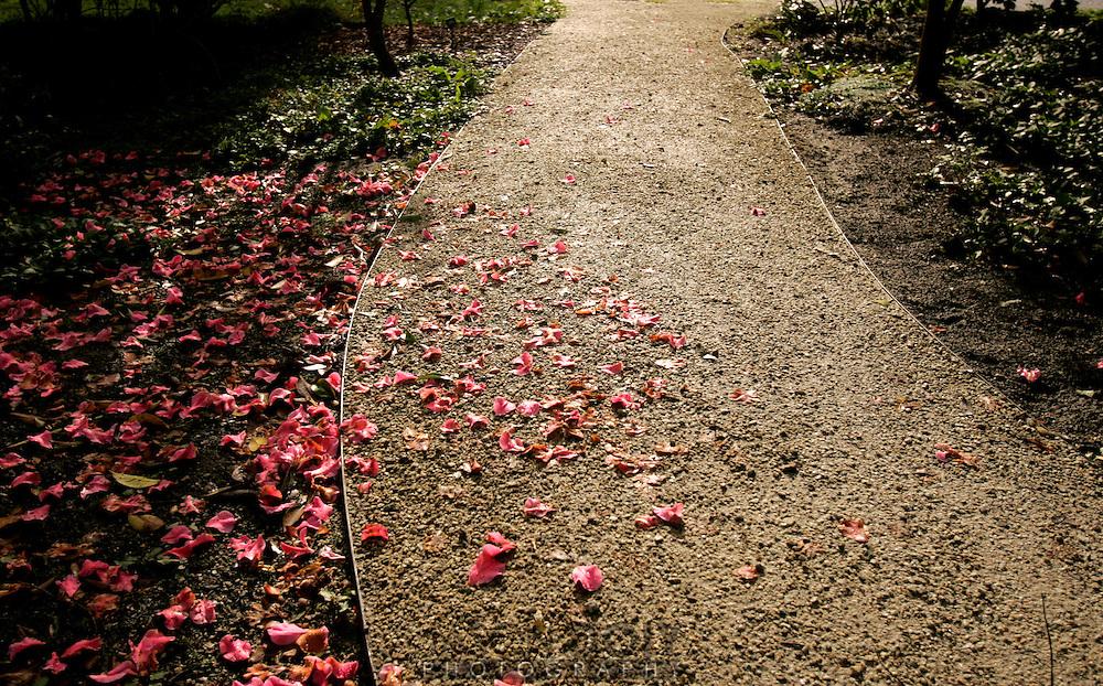 Golden Gate Park. Arboretum 10:02am..Photo by Jason Doiy.2-4-06