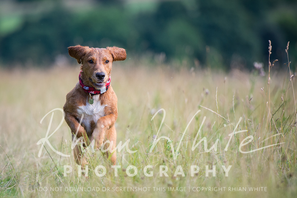 Darcy at Stanmer Park and Falmer Pond, Brighton