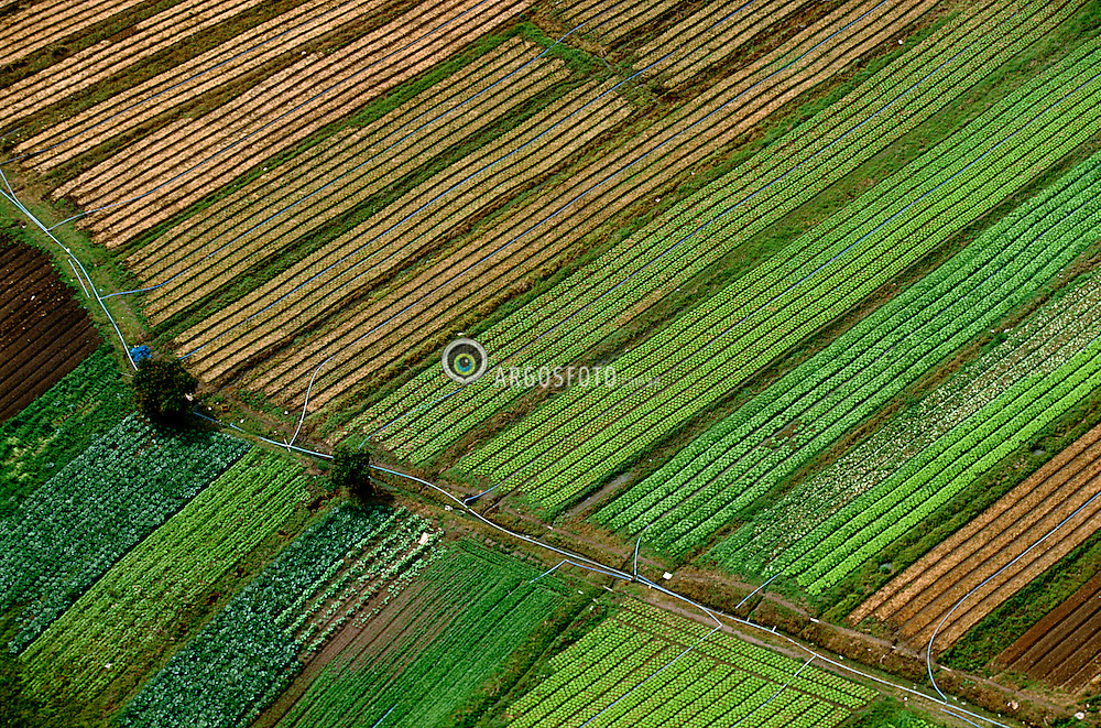Toledo, PR, Brasil. Out/1990.Area rural do municipio. Horta multicultura em linhas geometricas./ Rural area of Toledo city. Mixed orchard in geometric lines..Foto Marcos Issa/Argosfoto