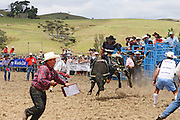 this bucking bull in mid air sends the officials running in this action photo at Hellensville Rodeo, Auckland, New Zealand
