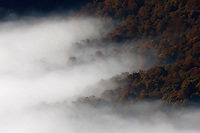 Carpathian beech forest in clouds, view from Polonina Carynska, Bieszczady National Park, Poland