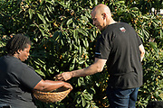 Democratic presidential hopeful Senator Cory Booker, right, has freshly harvested Loquat fruit from a tree to Germaine Jenkins, during a visit to Fresh Future Farm April 27, 2019 in North Charleston, South Carolina. Booker spent his 50th birthday helping out at the urban farm as part of his Justice For All tour.