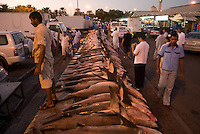 Dead sharks at Dubai fish market. Dubai, one of the seven emirates and the most populous of the United Arab Emirates sits on the southern coast of the Persian gulf.