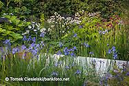 Flowerbed combination iris sibirica 'Gerald Darby', astrantia and Cirsium rivulare 'Atropurpureum'