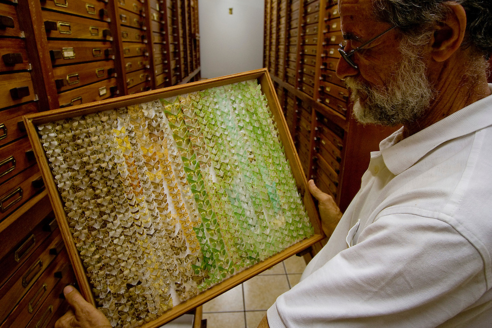 Vitor Becker and collection of lepidoptera