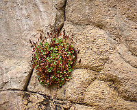 Plants on a rock wall. Rocky Mountain National Park. Image taken with a Nikon D2xs camera and 105 mm f/2.8 VR macro lens (ISO 125, 105 mm, f/2.8, 1/250 sec).