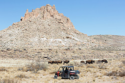 Ecotourists observing bison from ATVs, Ladder Ranch, west of Truth or Consequences, New Mexico, USA.