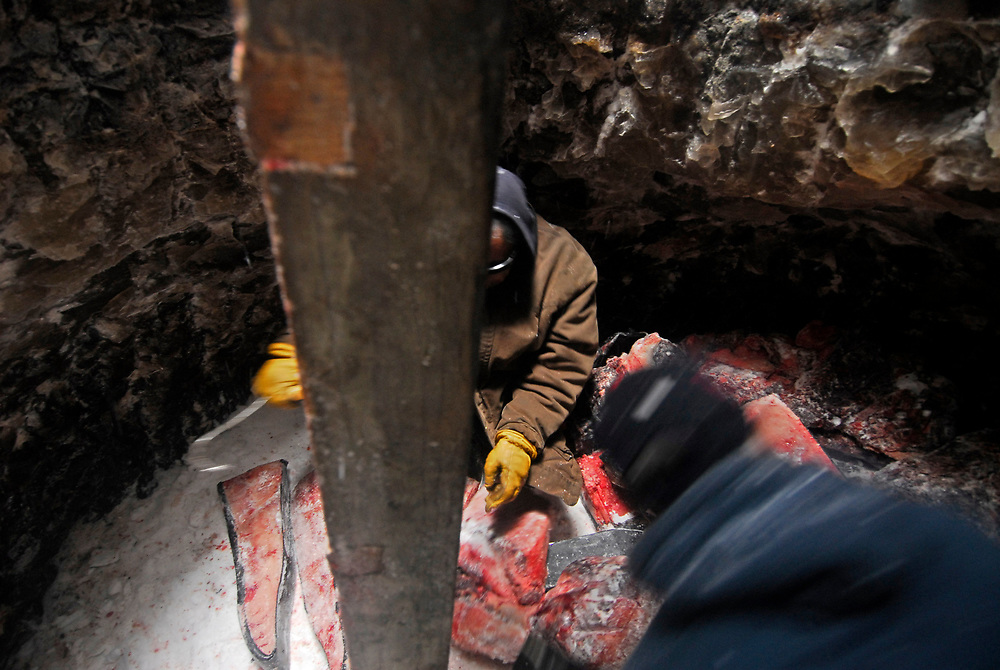 Alaska, Barrow. Hopson 3 crew stores the whale meat in the ice cellar. The ice cellar is a room dug into the ground permanently frozen, known as permafrost. The crew harvested together a 28 feet whale. Spring 2007.