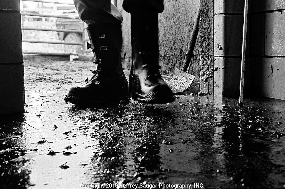 "BIDWELL, OHIO - October 1999: Bill Howard works in his milking barn at his farm in Bidwell, Ohio, in October 1999. With two milkings-a-day, Bill Howard spends a minimum of six-hours-a-day in rubber boots on the slippery concrete floor of his milking barn that is covered with cow waste. The 55-year-old former high school football star has high blood pressure, diabetes, arthritis in his hands, blood poisoning in his left foot and a bad knee from his football days. His doctor believes his leg was broken and he just kept playing football without knowing. ""I'm just falling apart,"" He said. (Photo by Jeffrey Sauger)"