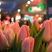 January tulips from Alm Hill Gardens farm, Pike Place Market, Seattle, Washington